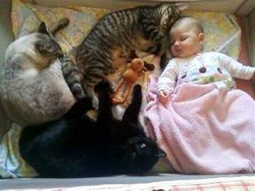 cats and babies baby napping with cats 1funny