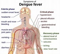 Dengue Fever: Symptoms, Foods To Eat And Avoid – Healthy Day