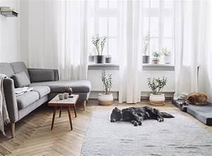 Wohnen Magazin : stilvoll wohnen mit hund 5 tipps zooroyal magazin ~ Orissabook.com Haus und Dekorationen
