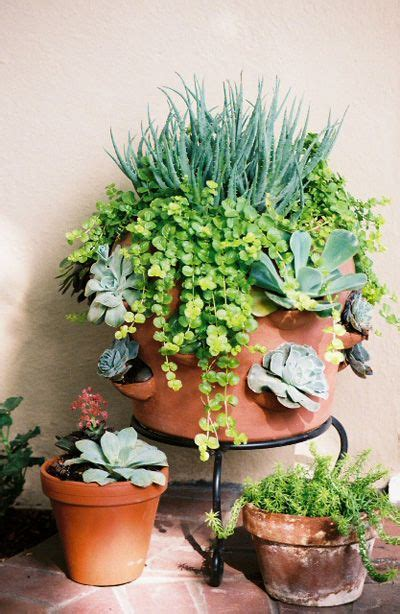 For The Love Of Succulents  Container Gardening