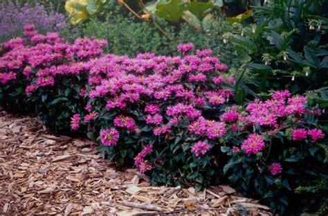 border plants for sun gardens my dream gardens pinterest