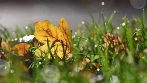 Rasen Düngen Herbst : rasen s en im herbst wann der beste zeitpunkt ist und wie ~ Watch28wear.com Haus und Dekorationen