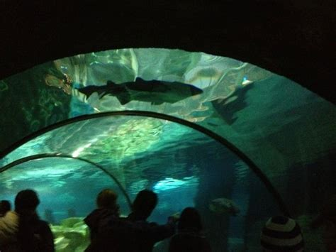 photo from aquarium tunnel sea minnesota bloomington tripadvisor