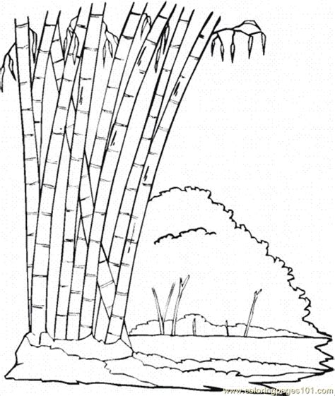 bamboo  coloring page  trees coloring pages