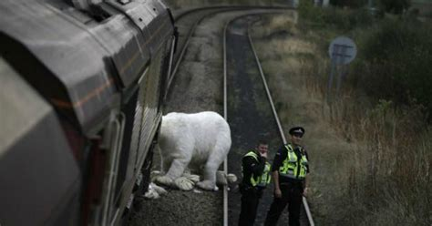fifty activists   polar bear halt uk coal train