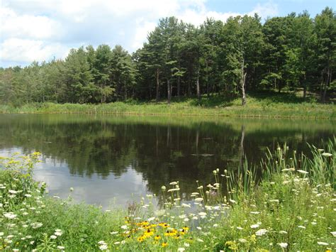 ponds pictures pond supplies in rochester new york by national pond service