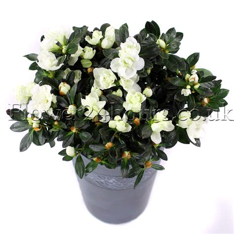 winter plants as gifts flowers flowers tips and