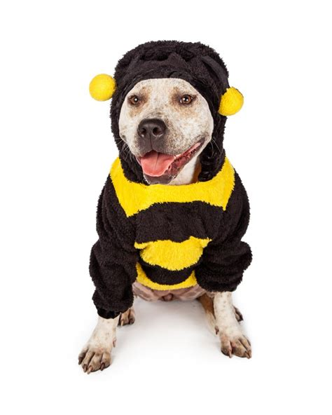 pit bull  halloween bumble bee costume olsens