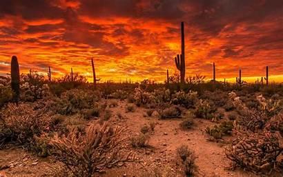 Arizona Sunset Desert Tucson Saguaro Wallpapers Park