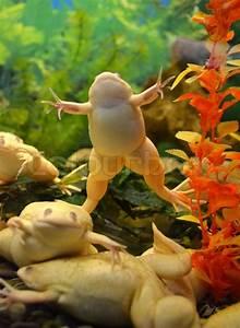 Frosch Als Haustier : tudse gul pet stock foto colourbox ~ Buech-reservation.com Haus und Dekorationen