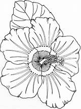 Luau Coloring Pages Printable Site Coloring2print sketch template