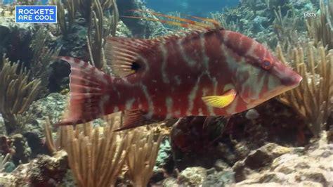 fish changing skin india