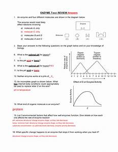 Enzyme Graphing Worksheet  U2014 Db