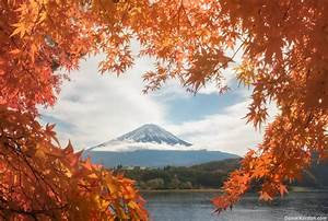 Japan in red: autumn leaves photo tour, 10 – 18 November ...