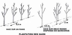 Comment Tailler Une Haie De Laurier : services a la personne haies plantation arrosage ~ Melissatoandfro.com Idées de Décoration