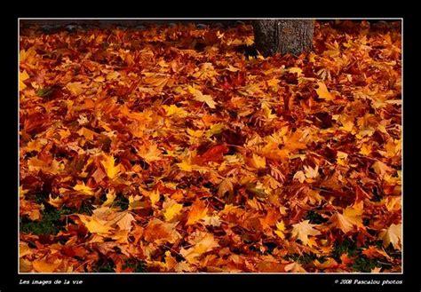 tapis de feuilles mortes 124 176 tapis de feuilles mortes les images de la vie