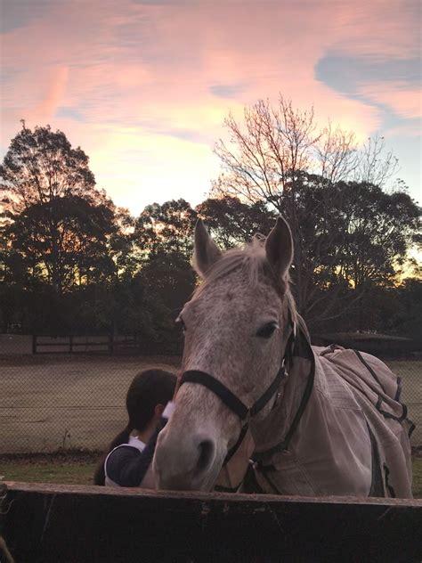 horses exotic horse riding