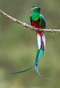20 Magnifiques Oiseaux Exotiques Dont Vous Ignoriez