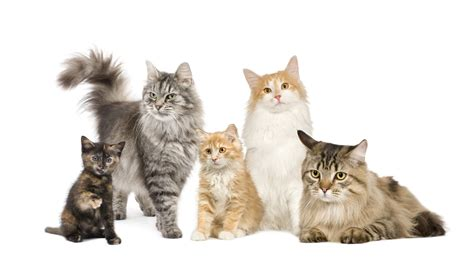 What Type Is Your Cat?