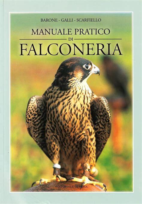 Animali Volanti by Falco Pellegrino Falco Peregrinus Animali Volanti