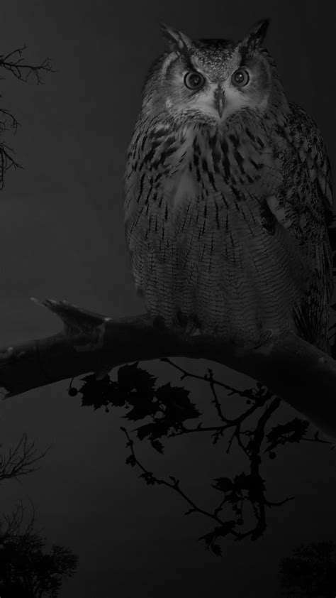 Owl Phone Wallpaper by White Owl Wallpaper Birds Animals 113 Wallpapers