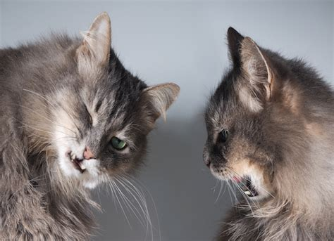 inter cat aggression petmd