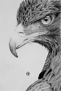 Eagle charcoal sketch, by Dorian Nacu. >> It took this ...