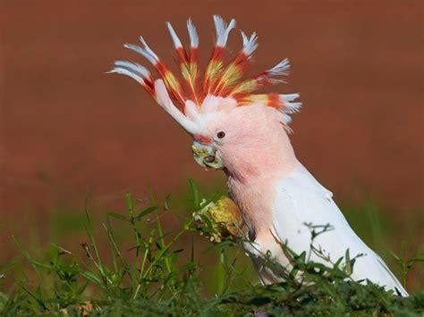 birds images  pinterest  screensavers