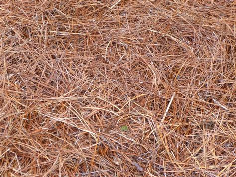 which mulch is best garden of aaron six reasons why pine straw makes the best mulch
