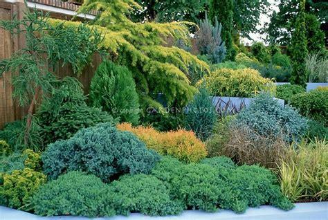 evergreen shrub mixed evergreen border garden pinterest gardens raised gardens and evergreen shrubs