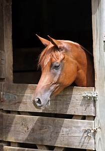 Horse, Owners, Beware, -, 3, Myths, That, Can, Be, Disastrous, To, Horse, Health