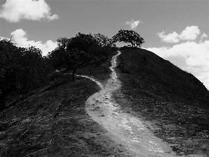 Two paths, diverged by DailyB on DeviantArt