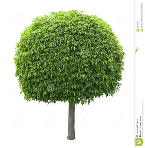 arbre form 233 par boule d isolement sur le fond blanc photo