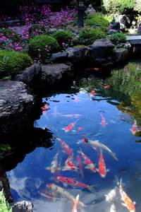 Kyoto Japan Koi Pond