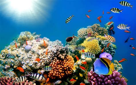 Coral Reef Backgrounds (54+ images)