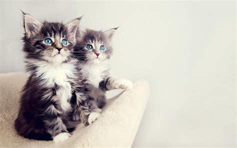 Hd Katten Wallpapers En Foto's  Mooie Leuke Achtergronden