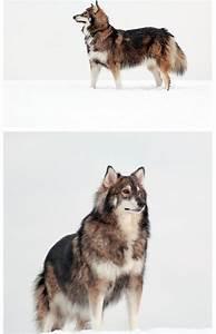 De 25+ bedste idéer inden for A wolf på Pinterest | Scott ...