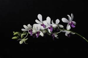 Orchideen Klebrige Blätter : anleitungen im bereich garten zum thema orchidee ~ Whattoseeinmadrid.com Haus und Dekorationen
