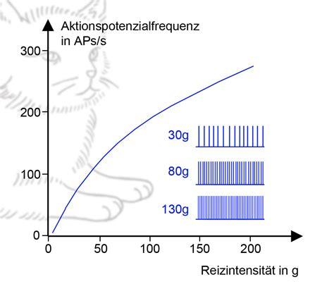 Nett Nervenzelle Anatomie Galerie  Menschliche Anatomie
