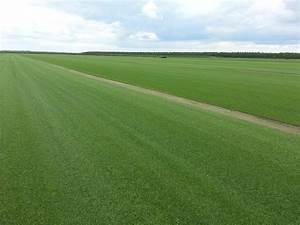 Rouleau Gazon Naturel : gazon naturel en rouleau livraison du gazon en rouleau et ~ Melissatoandfro.com Idées de Décoration