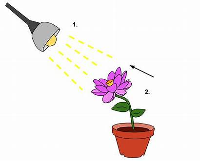 Response Plant Stimulus Phototropism Tropism Phototrophic Stimuli