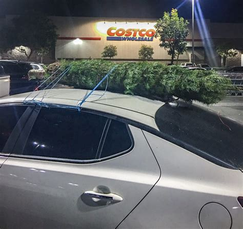 when does costco sell christmas trees does costco sell trees they do and they are epic