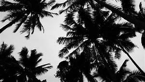 trees tumblr Gallery