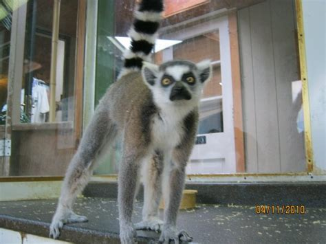 Pocono Activities - Pocono Snake & Animal Farm
