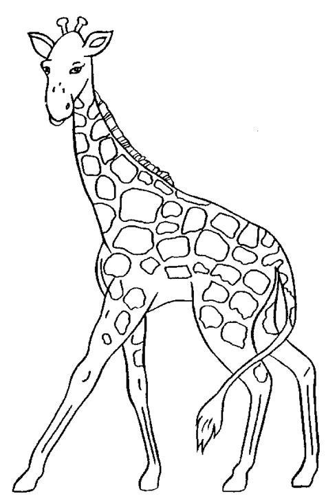 giraffe clipart clipartioncom