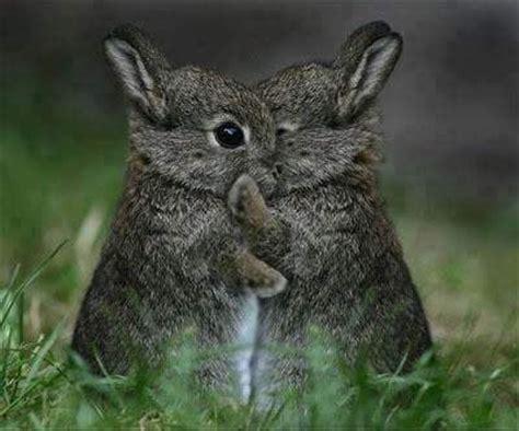 cute bunny rabbits kissing luvbat