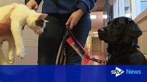 pair of boisterous kittens adopted by guide dog training With dog training centre