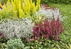 Heidegarten anlegen obi ratgeber for Garten planen mit erika pflanze balkon