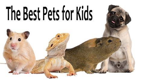 Best dogs