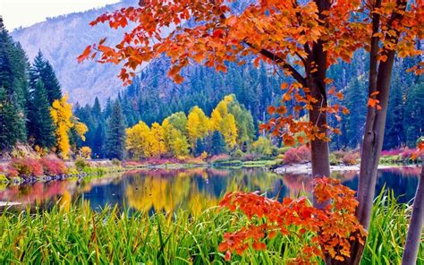 photo colorful forest colorful colors forest